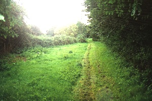 Photograph: Thorpewood meadow